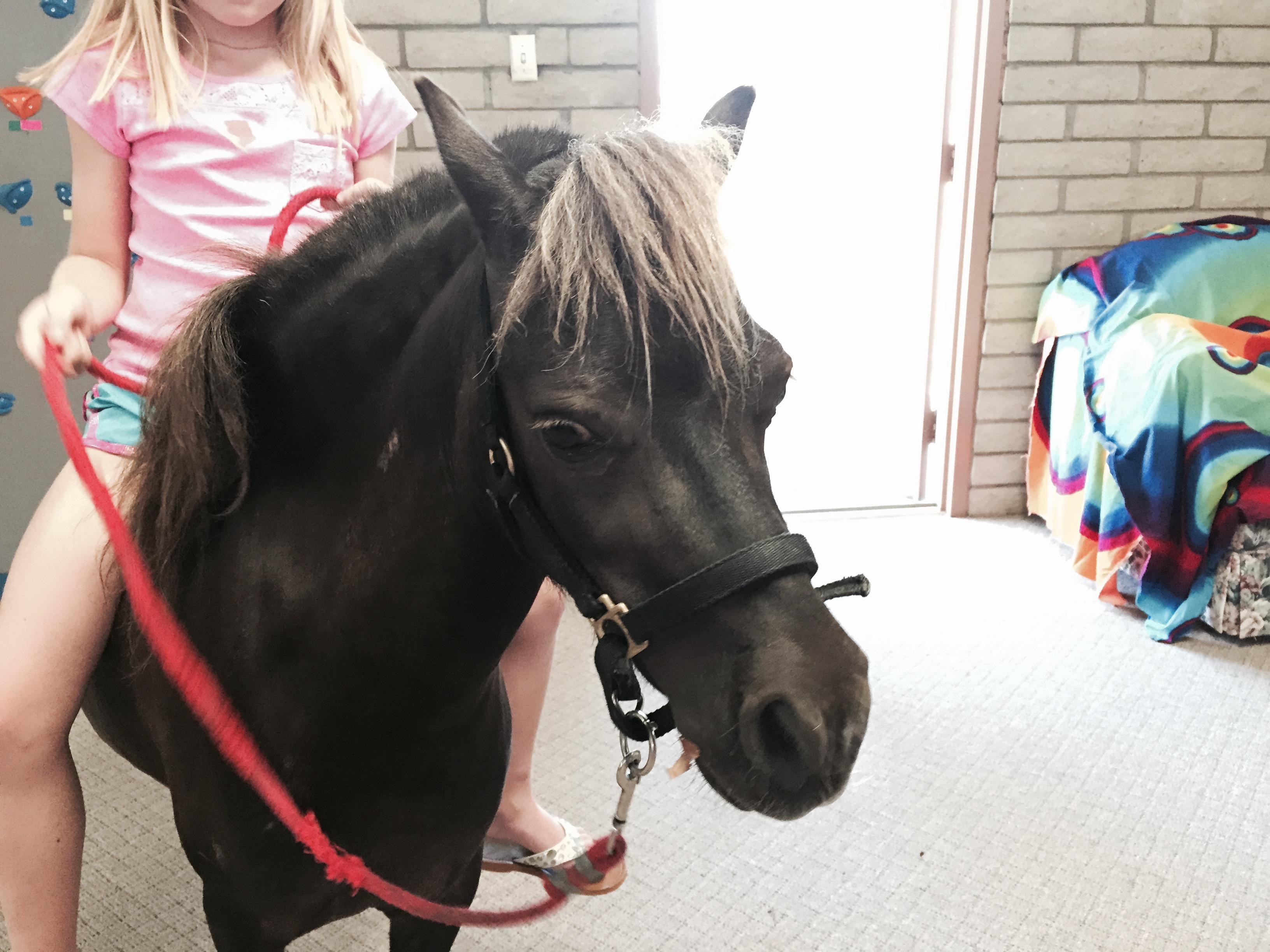Kid riding a pony